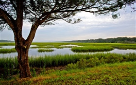 Amelia Island, Florida, USA, tree, swamp HD wallpaper
