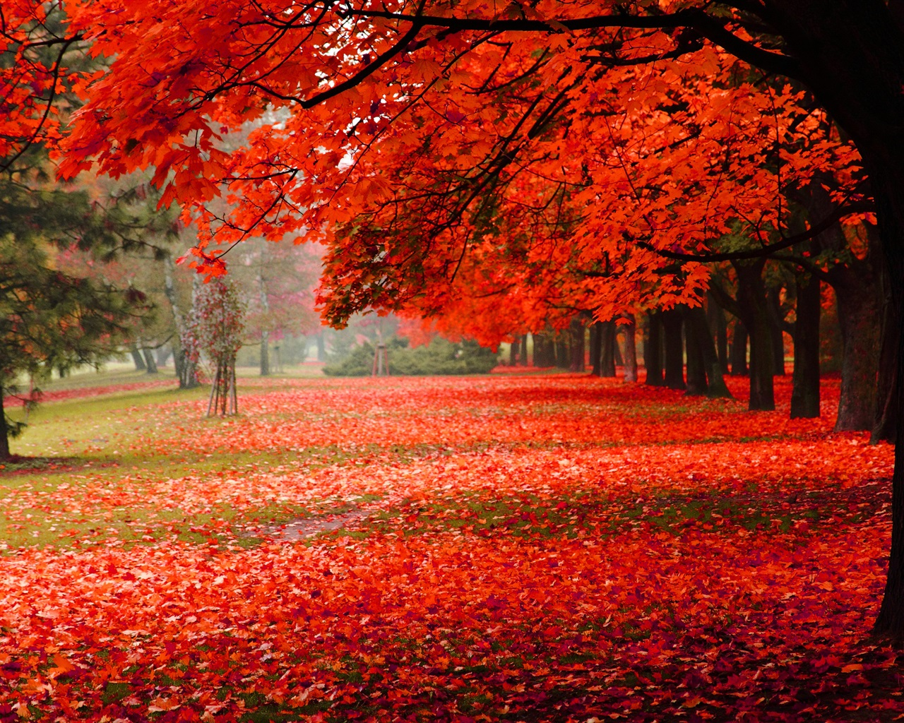Beautiful autumn, red leaves 1280x1024 wallpaper