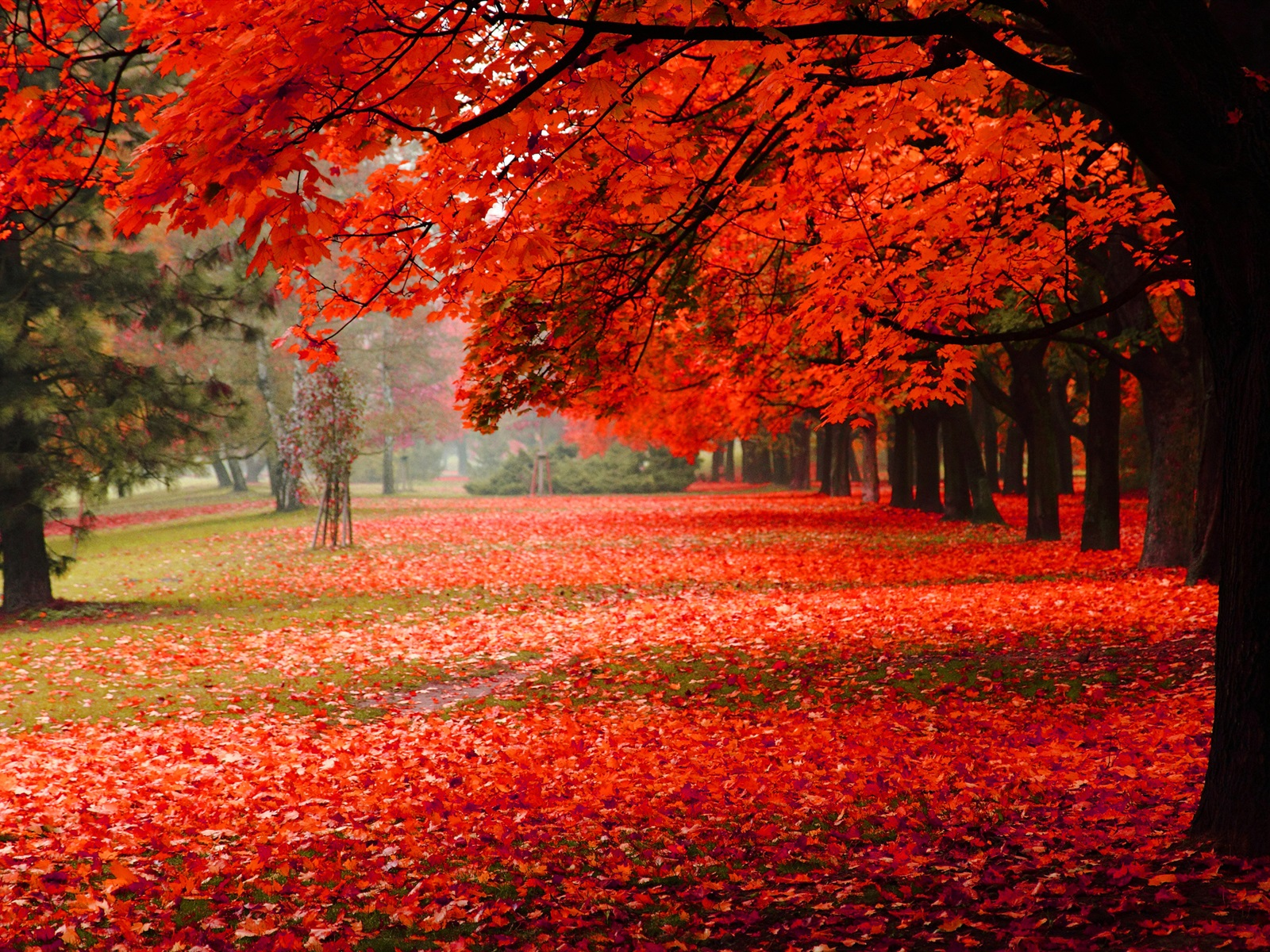 Beautiful autumn, red leaves 1600x1200 wallpaper