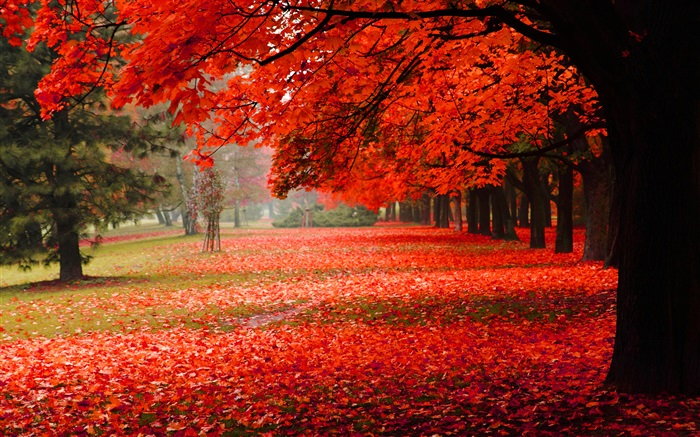 Beautiful autumn, red leaves Wallpapers Pictures Photos Images