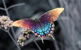 Beautiful butterfly, colorful wings HD wallpaper