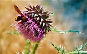 Bees, beetles, purple flowers HD wallpaper