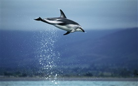 Blue sea, dolphin flying HD wallpaper
