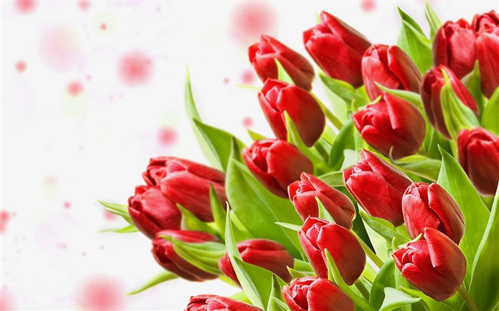 Bouquet flowers, red tulips Wallpapers Pictures Photos Images