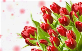 Bouquet flowers, red tulips HD wallpaper