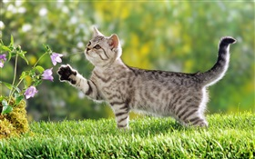 Cat touch flower HD wallpaper