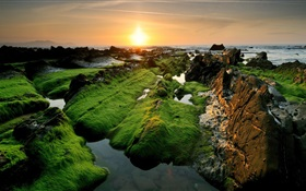 Coast beautiful sunset, moss HD wallpaper
