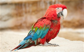 Colorful feather little parrot HD wallpaper