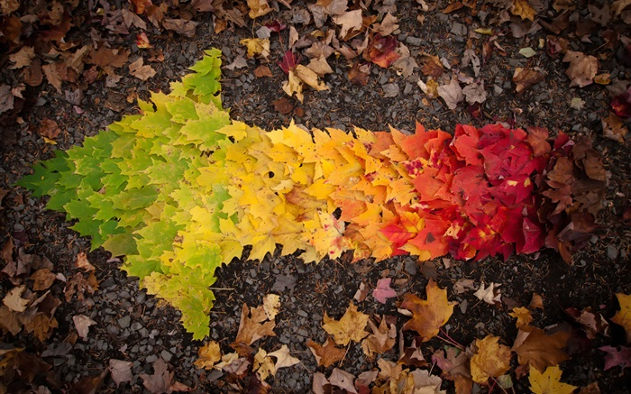 Creative pictures, autumn leaves arrow Wallpapers Pictures Photos Images