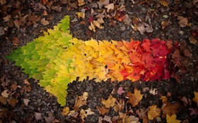 Creative pictures, autumn leaves arrow HD wallpaper