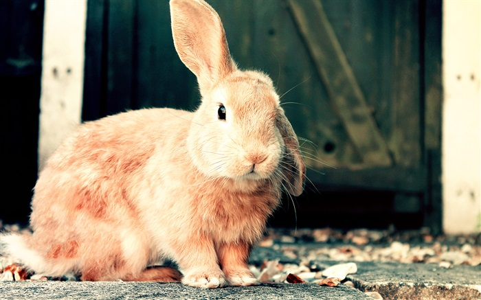 Cute brown rabbit Wallpapers Pictures Photos Images