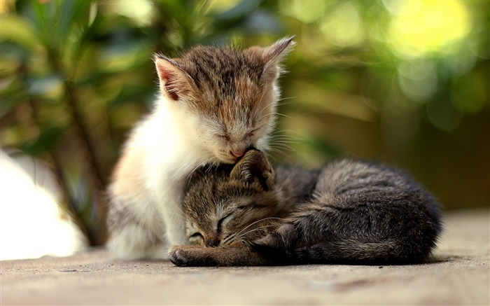 Cute kitten falling asleep Wallpapers Pictures Photos Images