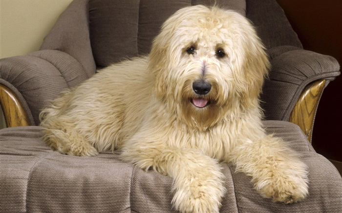 Dog on the sofa Wallpapers Pictures Photos Images