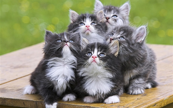 Five kittens Wallpapers Pictures Photos Images