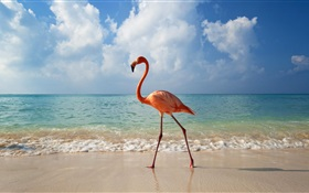 Flamingos stroll on the beach HD wallpaper