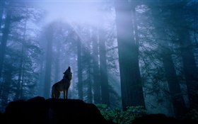 Forest wolf HD wallpaper