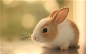 Furry rabbit cub HD wallpaper