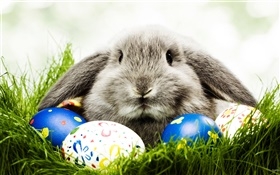 Gray rabbit and eggs HD wallpaper