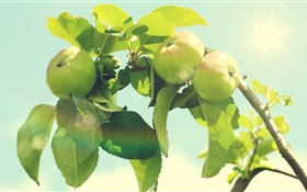 Green apple tree HD wallpaper