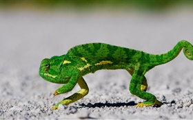 Green chameleon on the road HD wallpaper