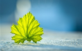 Green leaf close-up, ground HD wallpaper