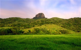 Hillside, green, field HD wallpaper
