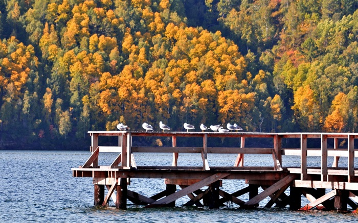 Lake Baikal, Russia, pier, birds, trees Wallpapers Pictures Photos Images