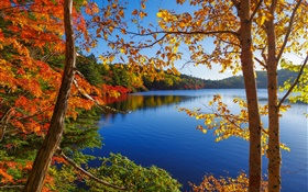 Lake, trees, forest, blue sky, autumn HD wallpaper