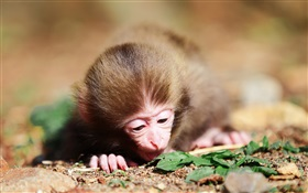 Little monkey HD wallpaper