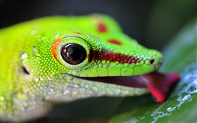 Lizard head close-up HD wallpaper