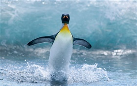 Lonely Antarctic penguin HD wallpaper