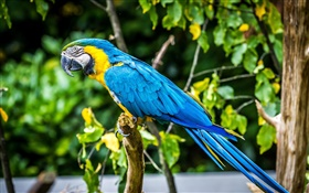 Lovely blue feather parrot HD wallpaper
