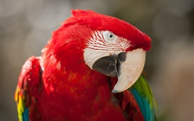 Macaw head close-up HD wallpaper