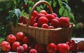Many red plums, basket HD wallpaper