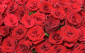 Many red rose flowers HD wallpaper
