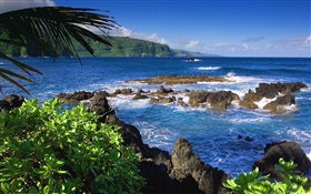 Maui, Hawaii, United States, sea HD wallpaper