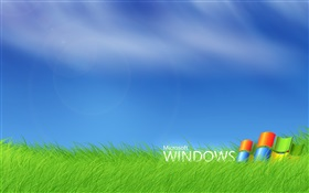 Microsoft Windows logo in the grass HD wallpaper