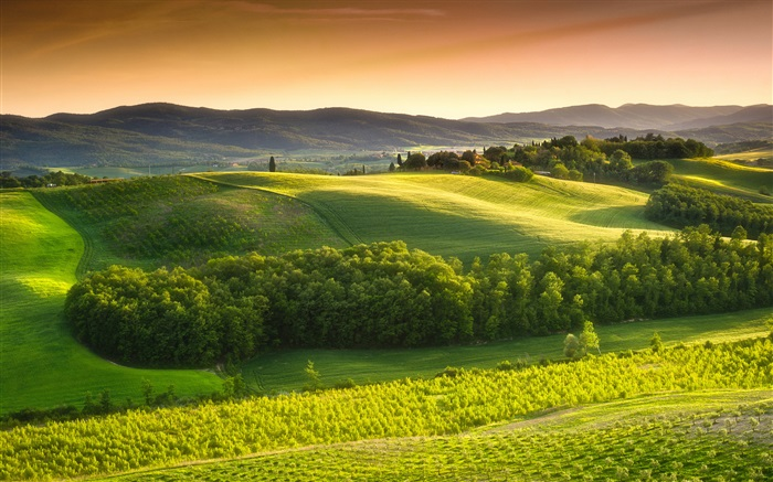 Morning nature landscape, fields, fog, Italy Wallpapers Pictures Photos Images