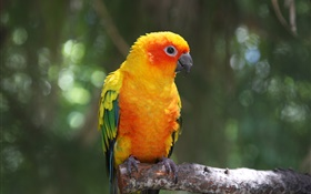 Orange feather parrot HD wallpaper