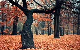 Park, trees, red leaves on the ground HD wallpaper