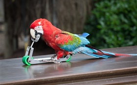 Parrot play skateboarding HD wallpaper
