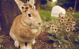 Rabbit and flowers HD wallpaper