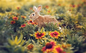 Rabbit hidden in the flowers HD wallpaper