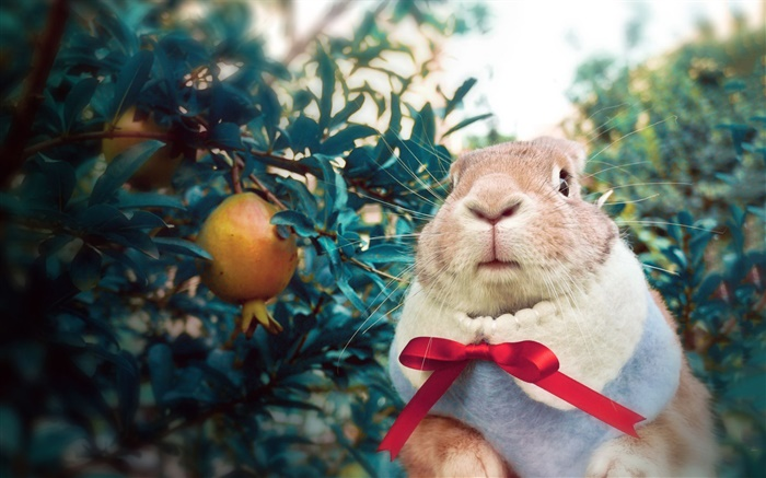 Rabbit wearing scarf Wallpapers Pictures Photos Images