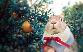 Rabbit wearing scarf HD wallpaper