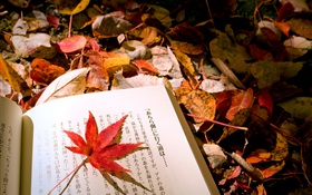 Red leaves, Japanese book HD wallpaper