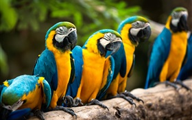 Rest of parrot HD wallpaper