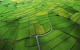 Rice paddy top view HD wallpaper