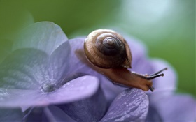 Snail, blue flowers HD wallpaper