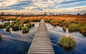 Swamp, boardwalk, grass, dusk HD wallpaper